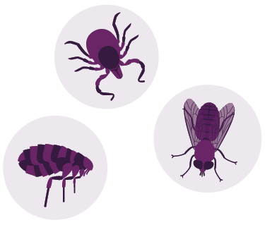 Bug icons including fleas and ticks